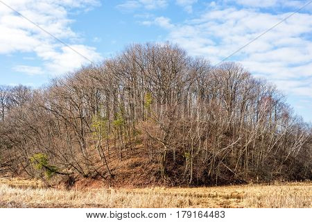 Strange dome shaped ground formation with trees growing out of it at all angles deep blue sky clouds