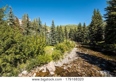 Gore creek in Vail Colorado with pine tree forest