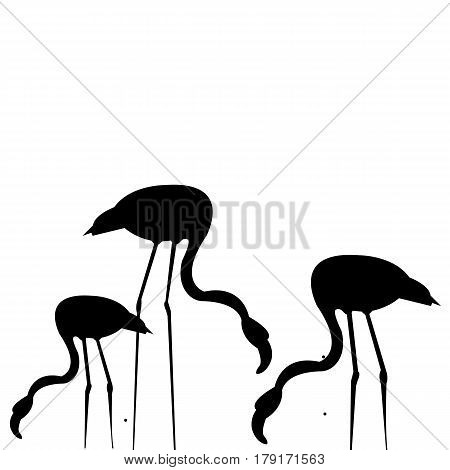 vector bird flamingo illustration pink exotic art silhouette beauty wild nature