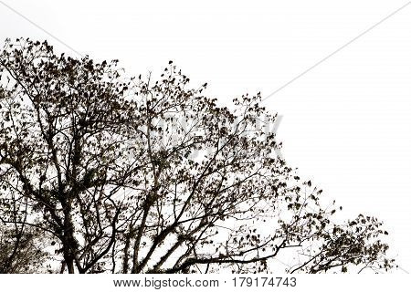 Tree branch silhouette against on white background.