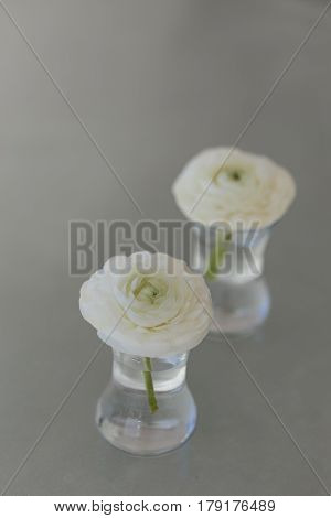 Two White Ranunculus Flower In Glass Of Water