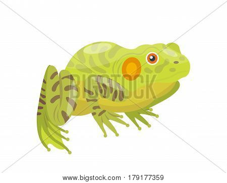Frog cartoon tropical green animal cartoon nature icon funny and isolated mascot character wild funny forest toad amphibian vector illustration. Graphic ecosystem croaking hop drawin.