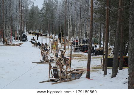 ROVANIEMI, FINLAND - FEBRUARY 19, 2017: Musher camp near Finnish Lapland capital Rovaniemi. It is the capital of Lapland, in northern Finland and the