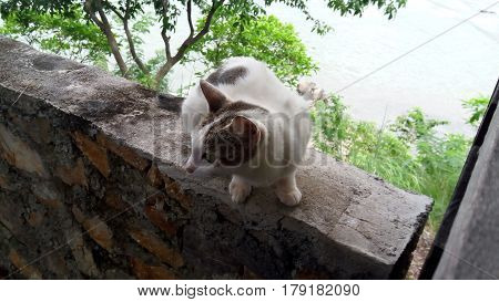 the fidgeted cat was waiting for feed