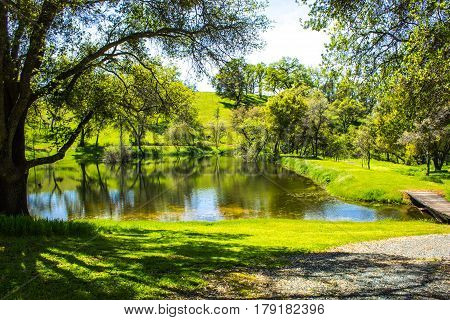 Peaceful Pond Surrounded By Oak Trees In Foothills