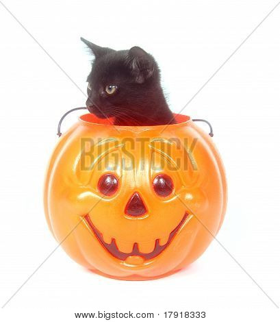 Black cat sitting inside of a plastic Halloween jack-o-lantern on white background poster