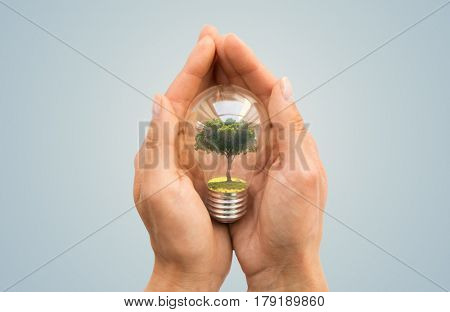 recycling, conservation, environment and ecology concept - close up of hands holding light bulb with tree inside over blue background