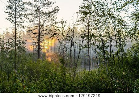 Landscape at dawn in the forest and swamp