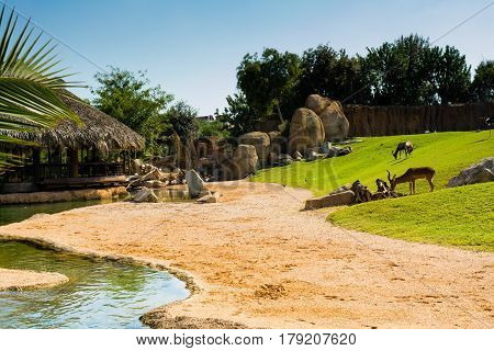 Relaxing view of large aviary with animals on green grass lawn sand and water on a hot sunny summer day with a rustic wooden house with straw roof in the background