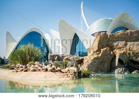 VALENCIA SPAIN - OCTOBER 2 2015: Largest oceanographic aquarium in Europe with pink flamingos sitting on the sand in City of Arts and Sciences (Ciudad de las Artes y las Ciencias)