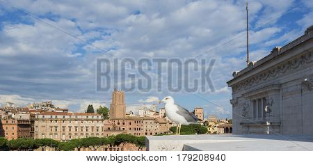 Sea gull watch Rome city center form Altar of Nation monument with clouds