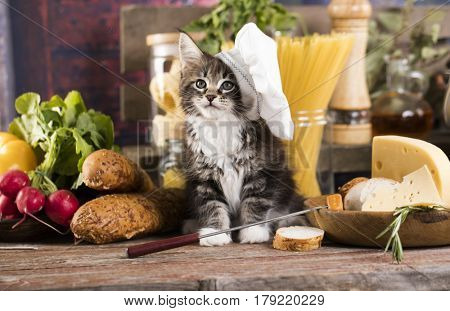 Kitten in a chef's cap and a piece of cheese