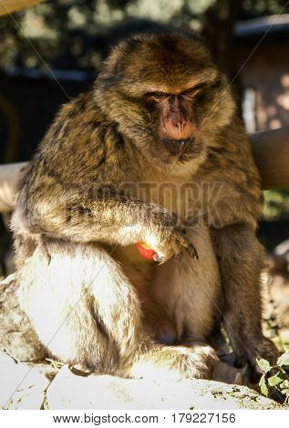 Closeup image of a monkey sitting in half shadowed position