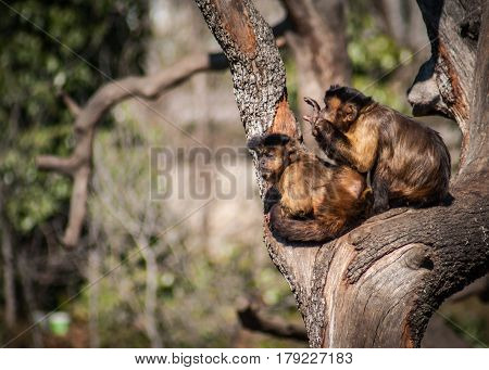 Image of two monkeys playing on a tree