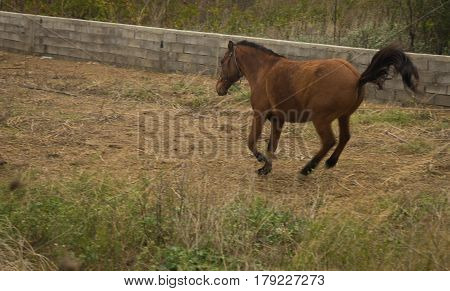 Scenic view of a vaulting brown horse with its tale up