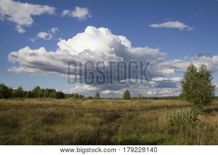 Late Summer. Meadows and trees under a blue cloudy sky
