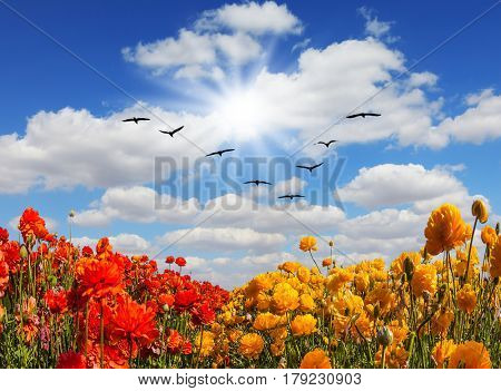 Migratory birds flying high in the sky. Strong wind drives the cirrus clouds. The southern sun illuminates the flower fields. Concept of rural tourism