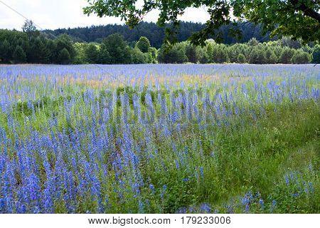 Beautiful Meadows