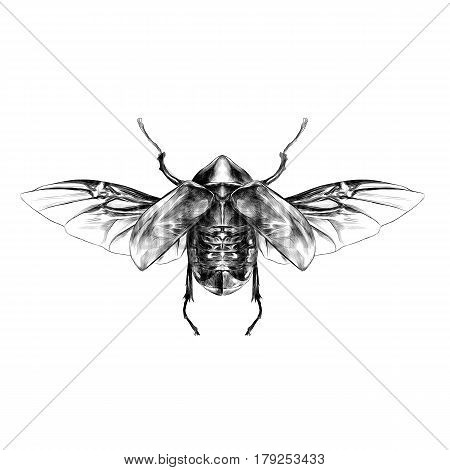 beetle with open wings top view symmetric flies sketch vector graphics