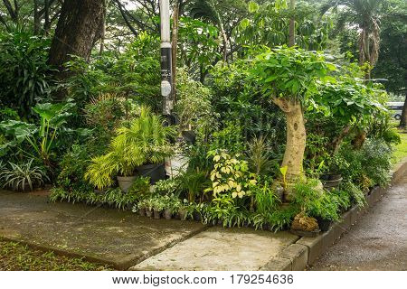 Various kind of plant, bonsai and flower arranged like a little jungle and sell by florist photo taken in Jakarta Indonesia java