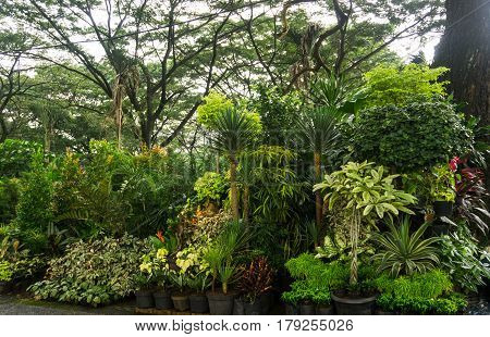 Various kind of plant and flower arranged like a little jungle and sell by florist photo taken in Jakarta Indonesia java