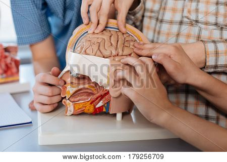 It feels funny. Brilliant imaginative excited students examining human brain using special plastic model while attending a biology class