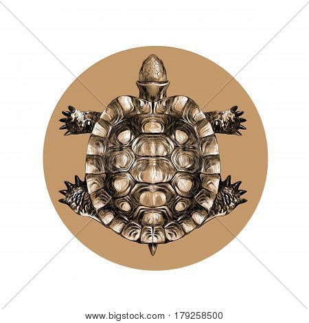 turtle top view carapace crawling sketch vector black-and-white pattern on a brown background circle