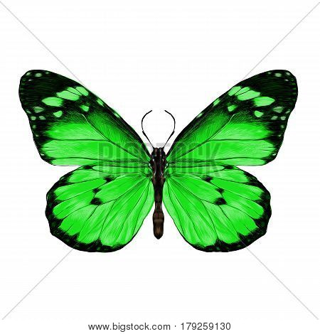 butterfly with open wings top view the symmetrical drawing graphics sketch vector color image green wings with a black pattern on the edges