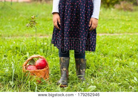 Little Six-Year Girl In Sarafan With Picture Stand Beside Wicker Basket With Ripe Apples On Green Grass In Garden Outdoors.