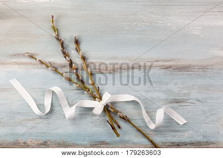 Traditional easter background. Pussy willow branch with ribbon on blue wooden background top view.