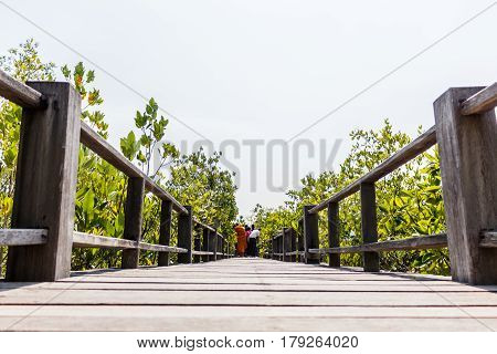 Wooden walkway at the mangrove forest in tropical coastal.
