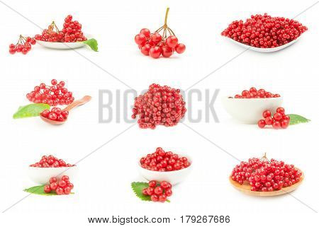 Collage of red guelder rose berries over a white background