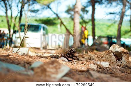 One dry brown pine cone lying on the ground among many spruce needles and stones in the forest against green foliage blue sky and blurred bus car and figures of people