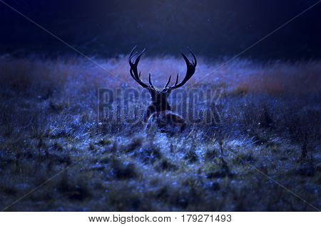 Lonely stag walking alone at night on the field by the forest.