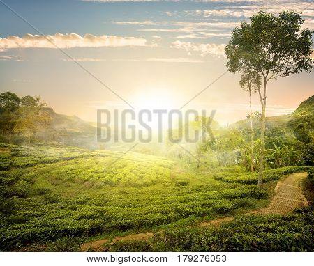 Fog and tea field in Nuwara Eliya, Sri Lanka