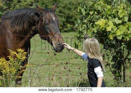 Loving Horse