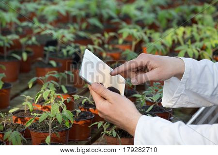 Scientist With Tablet And Sprouts In Green House