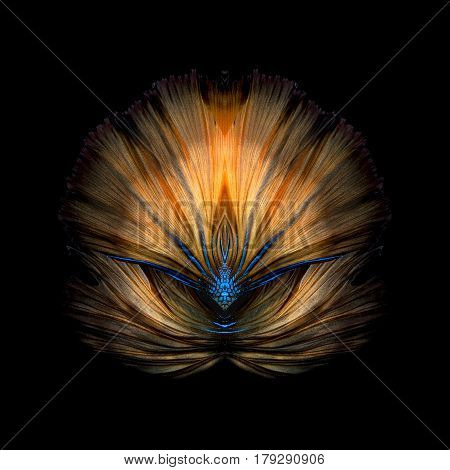 Abstract fine art colourful fish tail free form of Betta fish or Siamese fighting fish isolated on black background