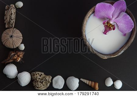 Orchid flower in milk in a coconut on a dark background preparation for a spa treatment shells and sea urchins on a dark background lie in the form of a corner.