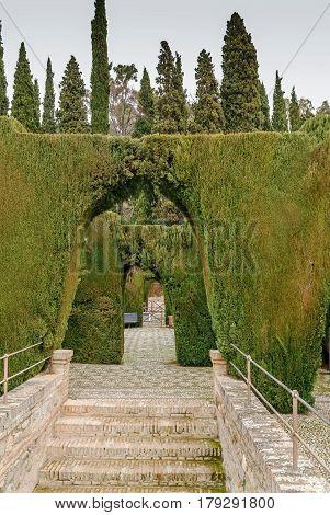 Green arcades in Generalife gardens Granada Spain
