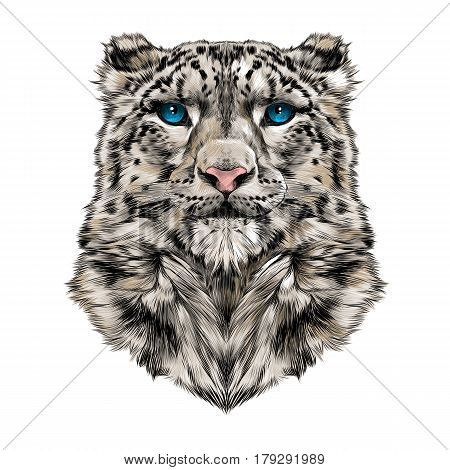 the head of the snow leopard full face symmetry color drawing sketch vector graphic blue eyes