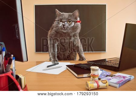 Cat Businessman With Glasses At The Table2