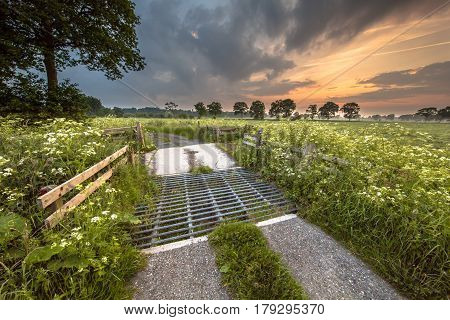 Cattle Grid Covered In Cow Parsley Flowers
