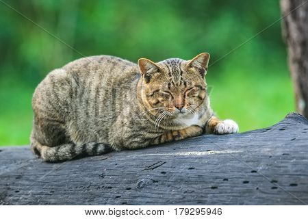 Portrait cute young gray cat with beautiful striped color be in a good temper on black timber sleeping on branch