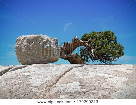 Rock and Tree, A Natural Lovely Relationship