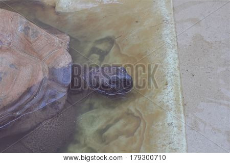 A tortoise with it's head slightly out of the water