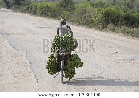Queen Elizabeth National Park Uganda - February 25 2017 : Man riding bicycle with green bananas through Queen Elizabeth National Park Uganda Africa.