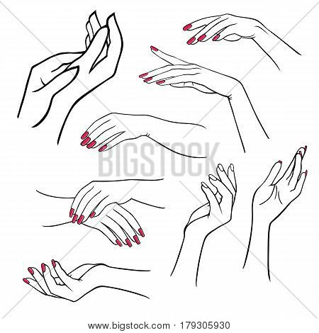 Woman's hands set isolated on white background vector illustration