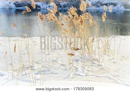winter landscape on the river near the forest.Covered with snow and hoar frost forest on the banks of the river.