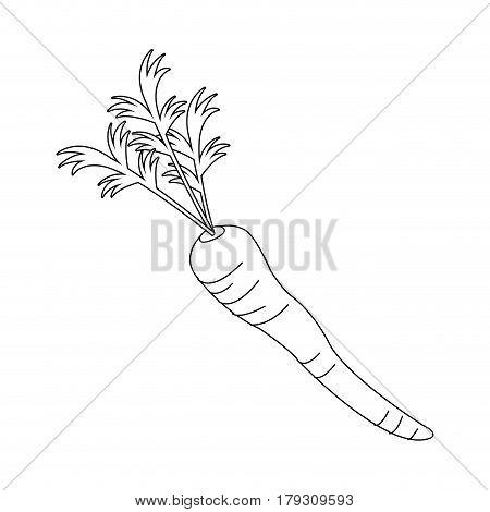 carrot vegetable icon over white background. vector illustration